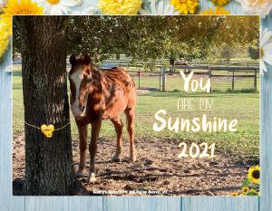 BEAUTY'S HAVEN FARM & EQUINE RESCUE 2021 CALENDAR