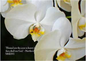 White Orchid Note Card
