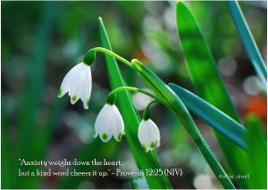 Snowdrops Folded Note Card