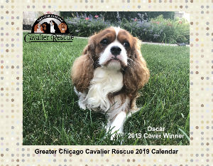 Greater Chicago Cavalier Rescue 2019 Calendar