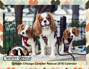 2018 Greater Chicago Cavalier Rescue Calendar