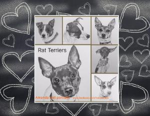 Rat terriers Graphite