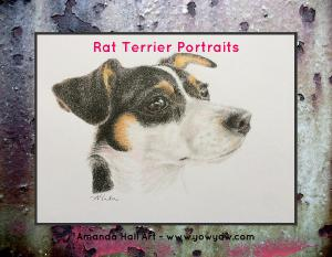 Rat Terrier Portraits