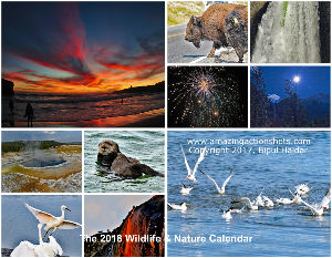The 2018 Nature & Wildlife Calendar
