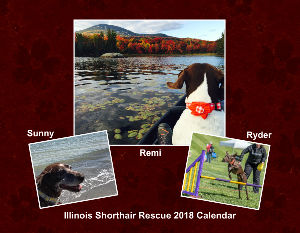 Illinois Shorthair Rescue 2018 Calendar