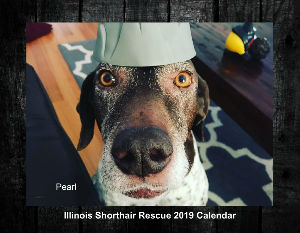 Illinois Shorthair Rescue 2019 Calendar