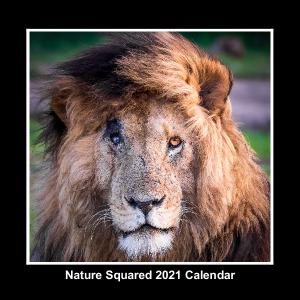 2021 Nature Squared Calendar by YS Wildlife