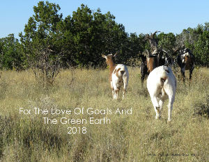 For The Love Of Goats And The Green Earth