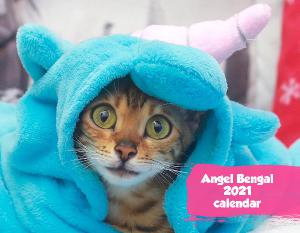 Angel Bengal 2019 Wall Calendar
