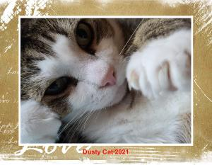 Dusty Cat Calendar 2021