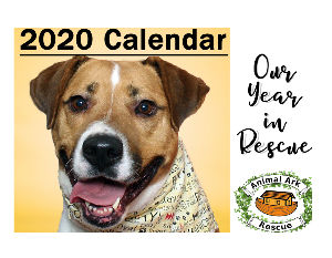 Animal Ark Rescue 2020 Wall Calendar