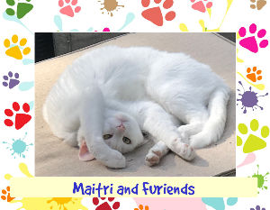 2018 Wall Calendar Maitri and Furiends