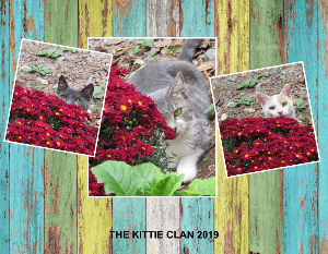 2019 KITTIE CLAN CALENDAR