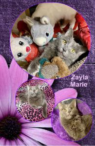 ZAYLA MARIE NOTEBOOK