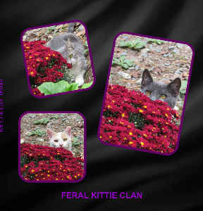 FERAL KITTIE CLAN PHOTO BOOK 1