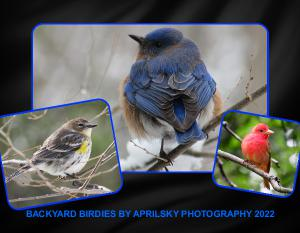 BACKYARD BIRDIES CALENDAR 2019 -18 MO CALENDAR
