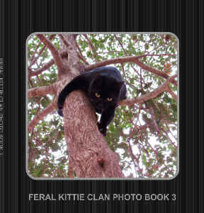FERAL KITTIE CLAN PHOTO BOOK 3