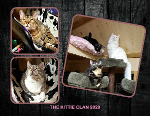 THE NEW 18 MONTH 2020 KITTIE CLAN CALENDAR