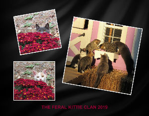 12 MO FERAL KITTIE CLAN CALENDAR