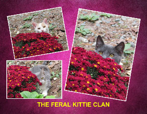 FERAL KITTIE CLAN CALENDAR