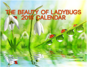 The Beauty Of Ladybugs 2018 Calendar