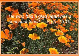 Glad Heart Poppies