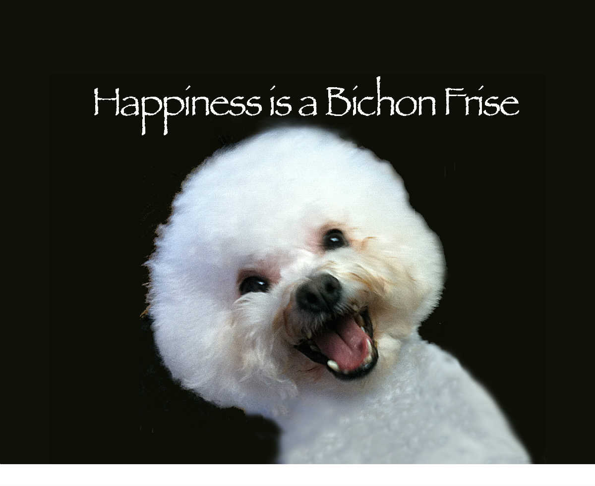 Happiness is a Bichon Frise (Canvas) - Create Photo Calendars