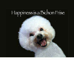 Happiness is a Bichon Frise (Canvas)