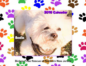 Got Bichon? T Shirt - Create Photo Calendars