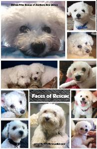 Bichon Frise Rescue Notebook