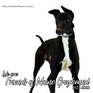 Friends of Maine Greyhound 2021