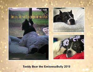 Teddy Bear the EmbassaBully 2019 calendar