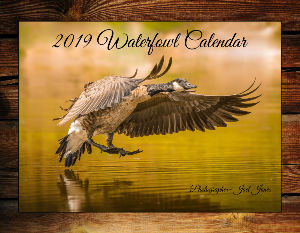 2019 Waterfowl Calendar by Joel Jones