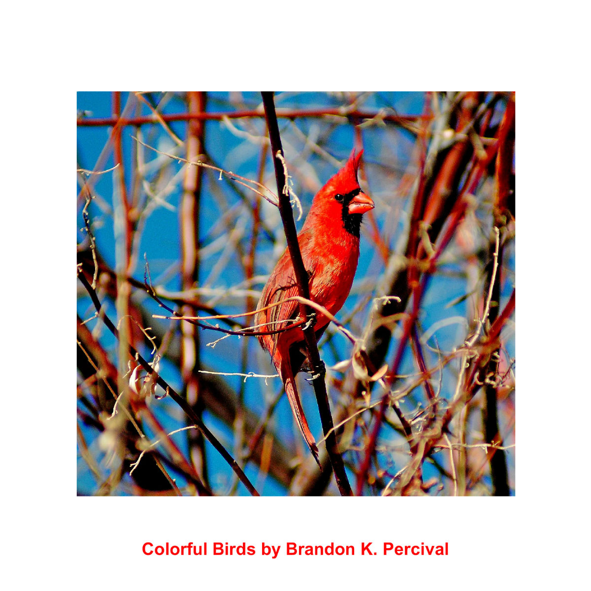 Colorful Birds Calendar