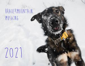 BraverMountain Mushing 2021