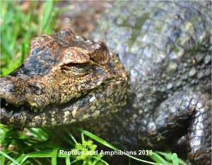 Reptiles and Amphibians 2018
