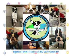 Boston Terrier Rescue of NC Wall Calendar