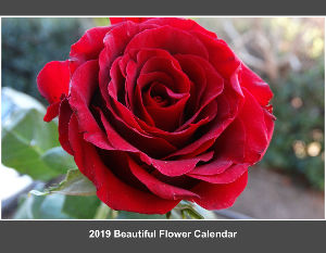2019 Beautiful Flower Calendar