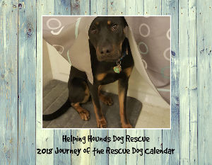 Helping Hounds Dog Rescue 2018 Calendar