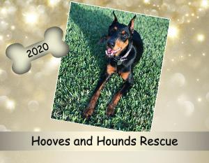 2020 US Hooves and Hounds Calendar