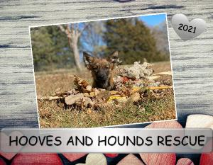 2021 US Hooves and Hounds Rescue Calendar