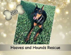 2020 CANADIAN Hooves and Hounds Rescue Calendar