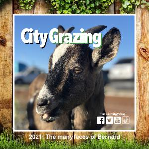 City Grazing - A Year Full of Bernard