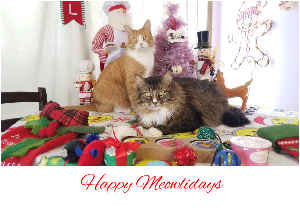 Christmas Cats Holiday Card