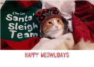Santa's Sleigh Team Cat Holiday Card