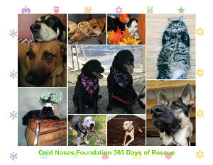 2019 365 Days of Rescue Calendar