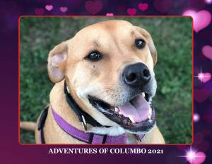 Adventures of Columbo 2021 Calendar
