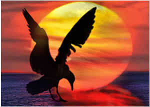 Card Sunrise Sunset Seagull By Concetta Ellis