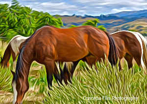 Note Card Horses On Ranch Photography Art
