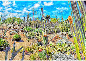 Note Card Cactus Landscape Photography